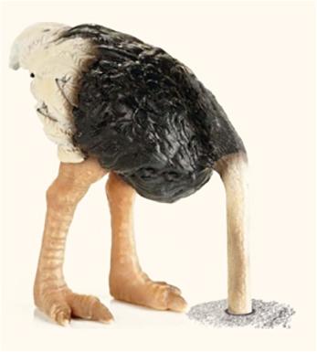 Resultado de imagen para imagenes avestruz hoyo