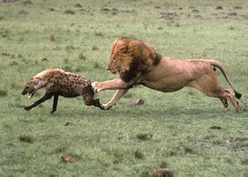 Resultado de imagen para imagenes animales cazando