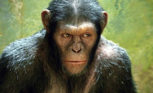 Resultado de imagen para imagenes simios