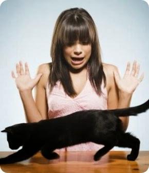 Resultado de imagen para imagenes miedo a los gatos