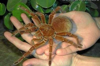 Resultado de imagen para imagenes arañas en las manos